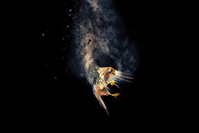 Flying Bird. Bird Of Prey. Dispersion, Splatter Effect. Black Background.