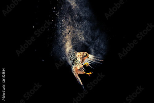 Canvas Print Flying bird