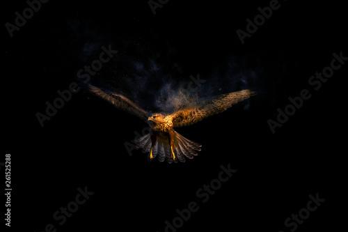 Photo Flying wild bird