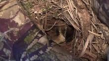 Bird Carolina Wren Turns Eggs ...