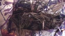 Bird Carolina Wren Building Nest Side View