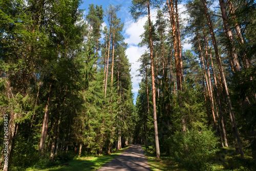 Valokuva  Asphalt road through the forest on a summer day