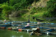 Fischzucht In Thailand
