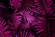 Ultra Violet background effect made of tropical leaves