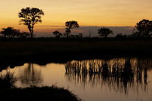 Sunset In The Veld