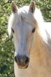 Pony, Portrait