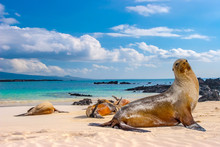 Ecuador. The Galapagos Islands...