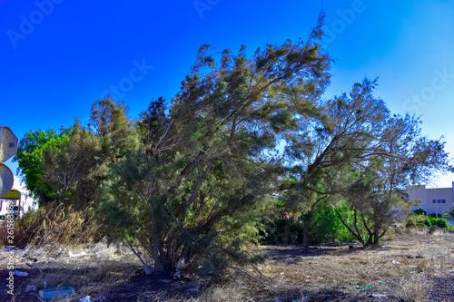 Fotografía  TREE ARE BENT BY WIND