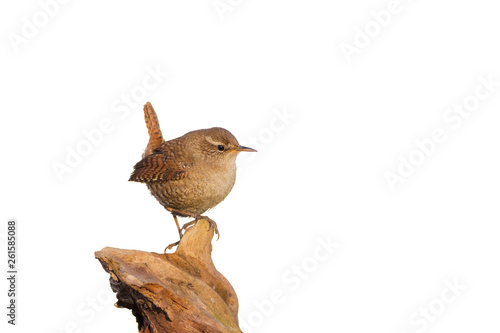 Fotografering Cute little bird