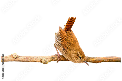 Fotografia Cute little bird