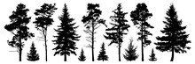 Forest Evergreen Trees Silhoue...