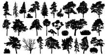 Trees Set Isolated On White Ba...