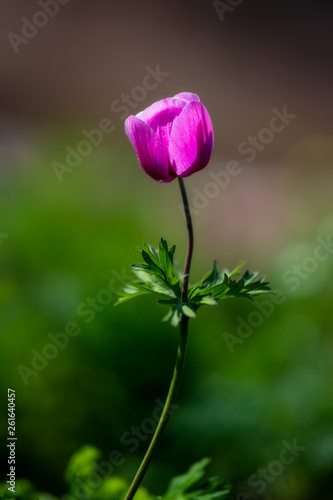 Photo  Macro of a flower in spring