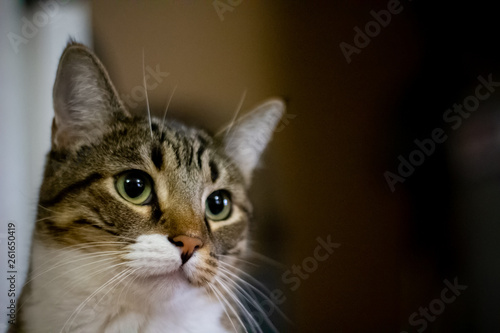 Tabby Cat with Bokeh