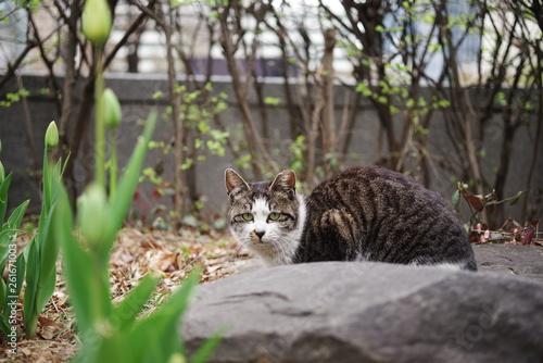 Fotografie, Obraz  lovely cute street cat