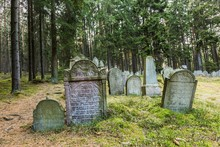 Pansky Vrch, Czech Republic / Europe - April 1 2019: Grey Tombstones With Hebrew Letters On An Old Jewish Cemetery Placed In The Woods Close To Drmoul, Surrounded With Trees, Green Grass