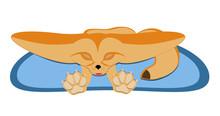 Fennec Fox Sleeping - Vector Illustration