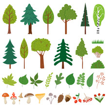 Forest Trees. Woodland Tree, Wild Berries Plants And Mushroom. Forests Floral Elements Vector Set