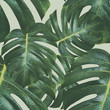 monstera plant pattern background