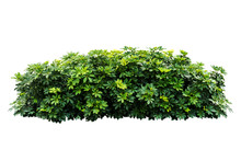 Plant Bush Tree Isolated With ...