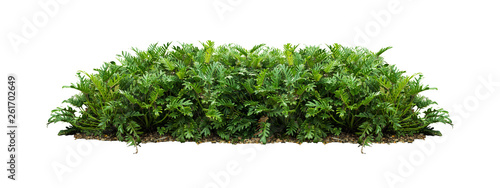 Deurstickers Planten plant bush tree isolated with clipping path