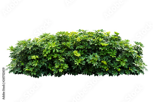 plant bush tree isolated with clipping path Canvas Print