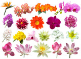 Fototapeta Kwiaty - flower plant isolated with clipping path