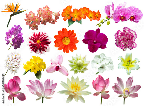 Poster Fleuriste flower plant isolated with clipping path