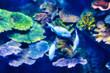 Dieses einzigartige Bild zeigt ein wunderschönes Aquarium mitten im Einkaufszentrum Siam Paragon. Das Foto wurde im Sea Life Aquarium in Bangkok aufgenommen