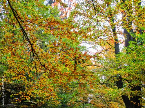 Fotografie, Obraz  Sächsische Schweiz Saxony Switzerland Bastei