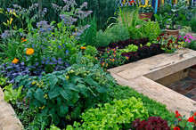 Vegetable Garden Growing In Raised Enclosed Beds With Vegetables And Flowers