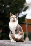 Fototapeta Na ścianę - cat in the garden