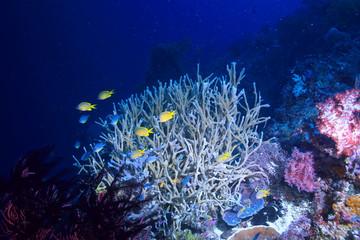 Fototapeta na wymiar under water ocean / landscape underwater world, scene blue idyll nature