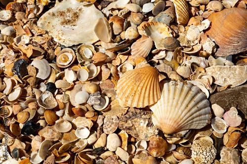 Tableau sur Toile Conchas en la playa.