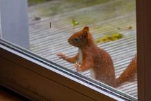 Neurgieriges Eichhörnchen Sch...