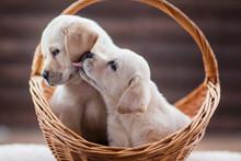 Cute Little Puppies