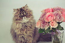Cat Sniffing A Bouquet Of Rose...