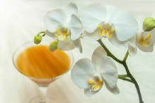 Beautiful Phalaenopsis Orchid Flower Blooming. Glass With Fruit Juice. Sunlight Needles.
