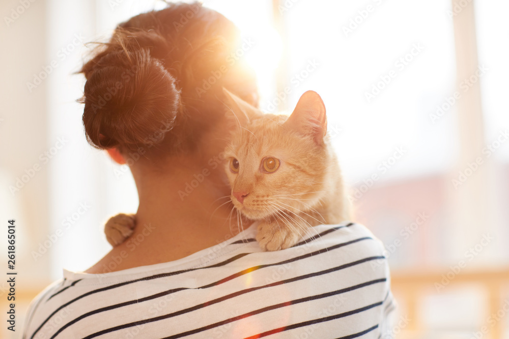 Fototapety, obrazy: Back view portrait of unrecognizable young woman holding gorgeous ginger cat on shoulder, copy space