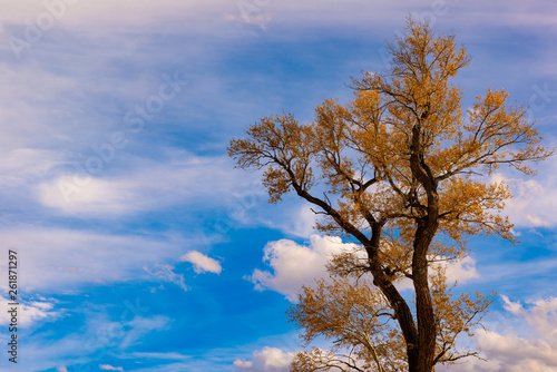 Isolated golden yellow tree rises in a wheat field set against a dreamy blue sky with the Rocky Mountains