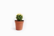 Echinocactus Grusonii Isolated On White Background