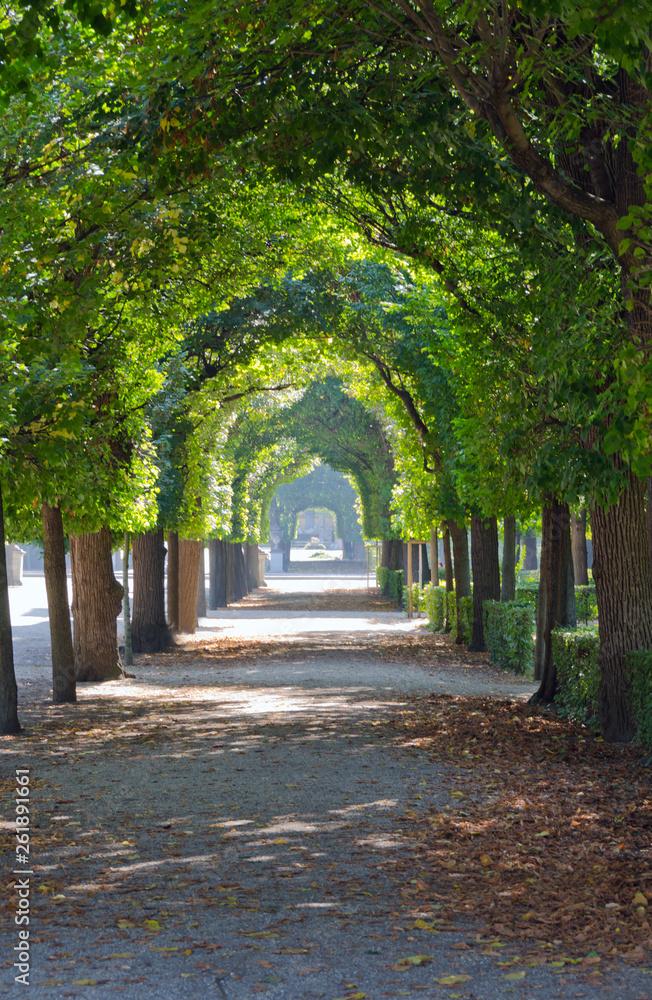 Fototapety, obrazy: Green tree alley