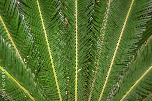 Door stickers Palm tree Folhas de uma palmeira