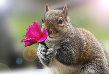 Love Is In The Air Squirrel And Flowers