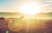 Horse On Sunrise