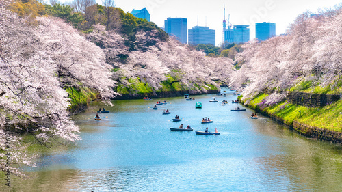 Photo  Cherry Blossoms In Tokyo , Japan
