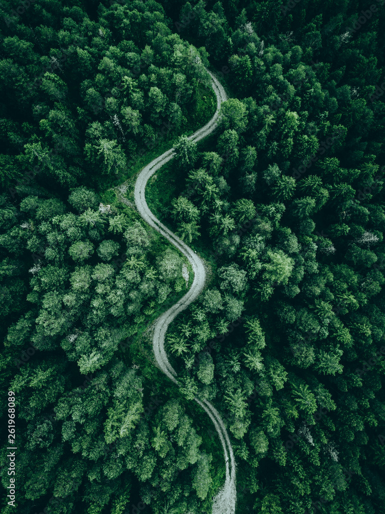 Fototapeta aerial view of a forest