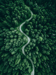 aerial view of a forest