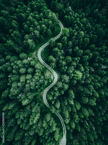 Cuadros en Lienzo aerial view of a forest