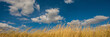 Leinwandbild Motiv white clouds against the blue sky and dry grass to a feather grass. Web banner.
